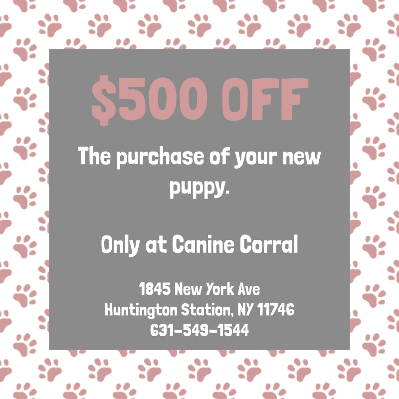 Coupon for $500 off of the purchase your new puppy