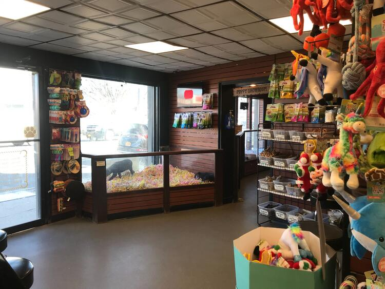 Picture inside Canine Corral retail store showing some puppy kennels and puppy supplies for sale.