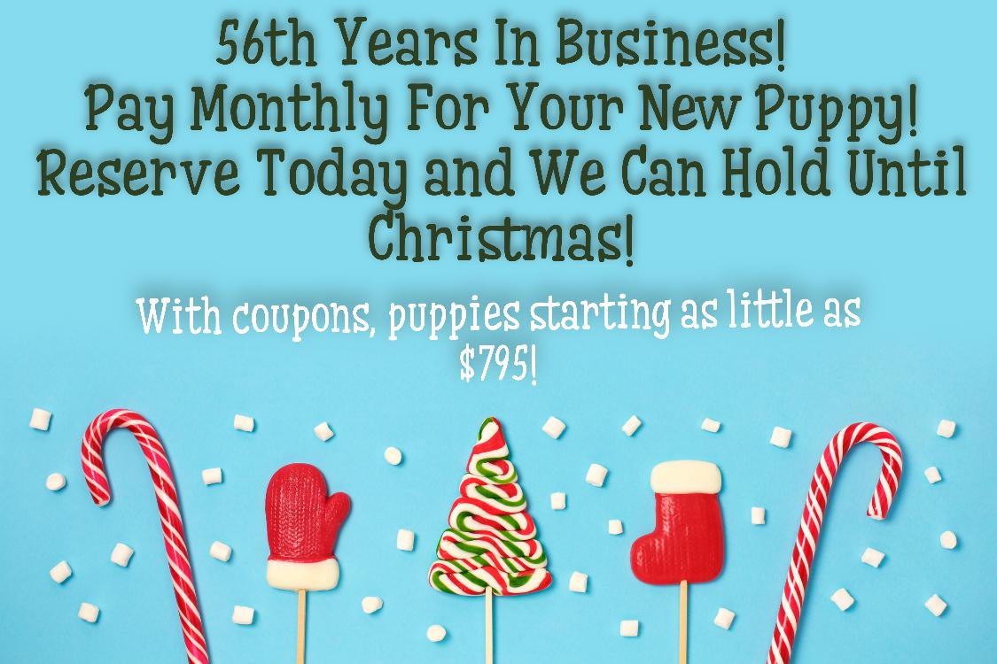 Christmas Puppy promotion